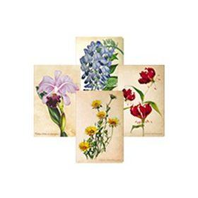 Painted Botanicals